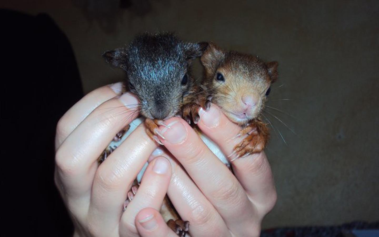 ichhörnchen in der Pflegestat