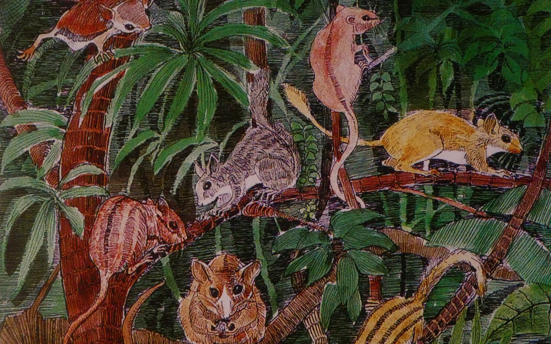 in fossiles Eichhörnchen und