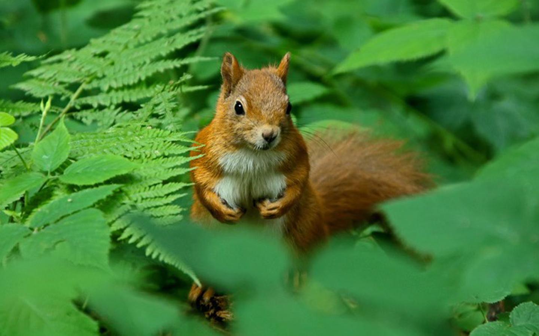 ichhörnchen vor der Kamera