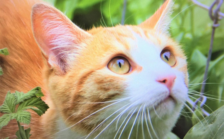 atzenglück und Katzenleid: Au