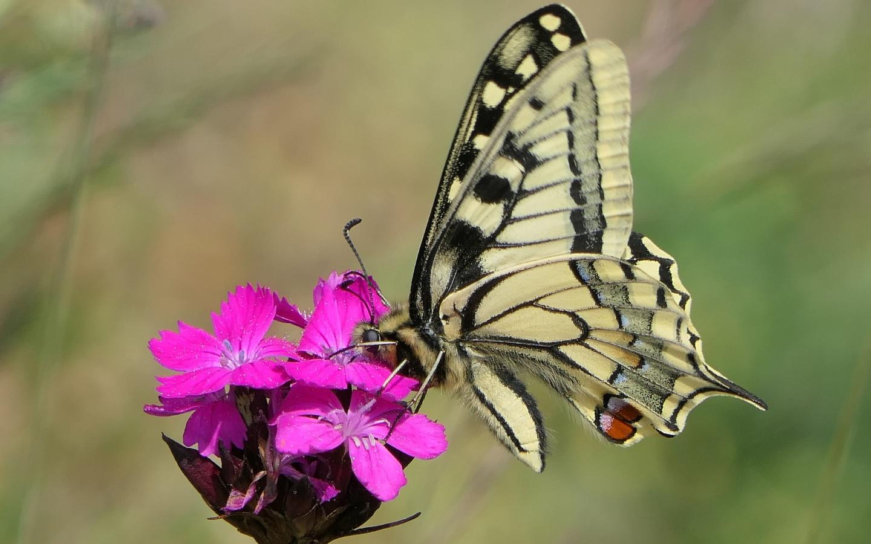 nternationaler Tag der Biodive