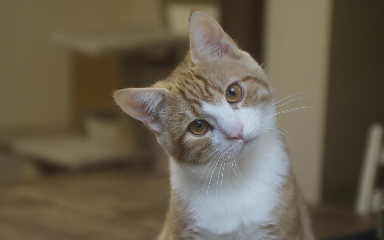 on Streunern und anderen Katze