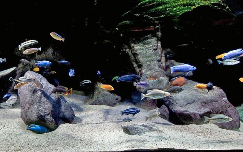 erein Aquaria: Internationaler